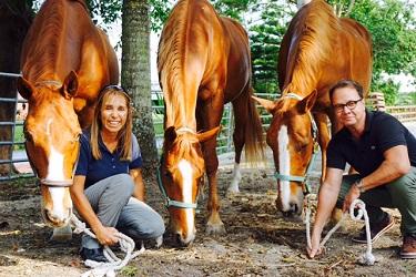3 horses_lightened_375x250
